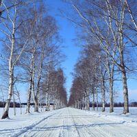 【北海道・道東】女子旅。冬におすすめのアクティビティ&可愛いおみやげ図鑑