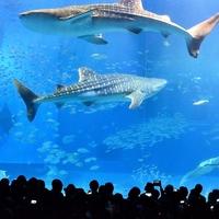 「非日常」世界が広がる。心満たされる『九州・沖縄の水族館』をめぐろう