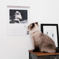 プレゼントにもおすすめ* 手作りカレンダーの作り方(壁掛け・写真入りなど)