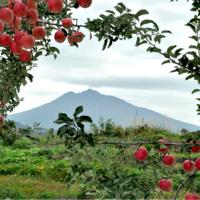 vol.106 木村木品製作所・木村崇之さん -青森から世界へ。りんごの木に吹き込む新しい命