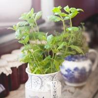 寒い季節も緑に囲まれた生活を【冬まきハーブ&野菜】を育ててみよう