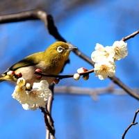 桃色に包まれた景色に魅せられよう…関東地方(東京)での梅の名所9選