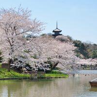 春爛漫とした陽気に包まれながら絶景を楽しもう♪桜の名所9選【神奈川県編】