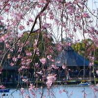 春爛漫とした陽気に包まれながら絶景を楽しもう♪桜の名所8選【千葉県編】