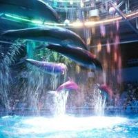 【国内】独特な世界観で「海の生き物」をみる。ユニーク&アート水族館6選