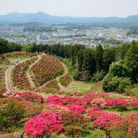 """器に、カフェに、福招き。日本一の栗の里「笠間」を歩く""""わたしの気まま旅"""""""