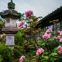 爽やかな春空と百花の王に魅せられて…牡丹の名所5選【奈良県編】
