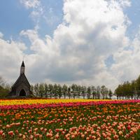 春の陽気に包まれながら。童話のような素敵な風景を見に行こう!東海地方のチューリップ畑
