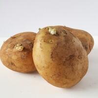 芽が出た野菜…どうしよう!正しい処理と保存方法をご紹介します。