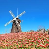 春の陽気に包まれながら童話のように可愛らしい風景を見に行こう…近畿地方のチューリップ畑