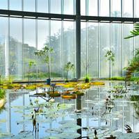 癒しと温かさを求めて♪寒い季節のお出かけにぴったりな都内の「温室」をご紹介
