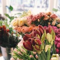 春の息吹がすぐそこに♪2月になったら、花屋さんへ「春のお花」を探しに行こう