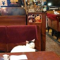 【都内】猫カフェじゃないよ。ただ猫がいる、そういうカフェで穏やかな休息を