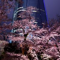 ロマンチックな春の夜*しっとりお花見を楽しめる都内の「夜桜スポット」