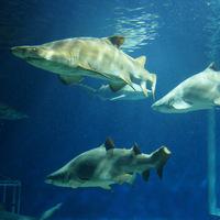 サメとマンボウの他にも見どころ満載!「大洗水族館」の楽しみ方と周辺スポット