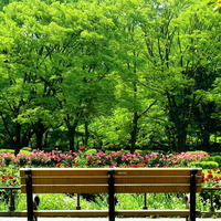 《写真を撮りに出かけよう~3月編~》春の写真散歩にぴったり。癒やしの公園特集