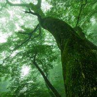 心地よい空気に包まれて心身をリフレッシュ。《東京》森林浴スポット