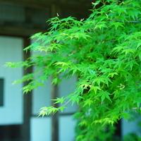爽やかな季節の紅葉狩り。福岡・佐賀・長崎の「青もみじ」スポット