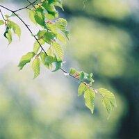 窓を開けて、風を感じながら…。新緑の季節に読みたい小説15選