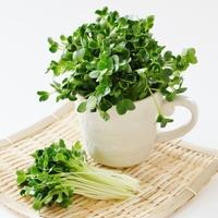 どうやって育てるの?を解決!『リボベジ』におすすめの野菜7選&育て方のコツをご紹介