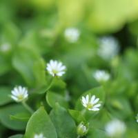 「冬に咲く花」をもっと好きになる。素敵な花言葉とガーデニングのコツ【冬篇】