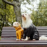 『犬用レインコート』は必要?実はお手入れの負担軽減と皮膚病予防に効果的!