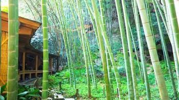 竹林の中の「休耕庵」