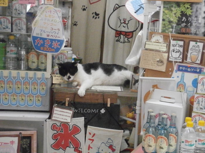 運が良ければ猫がお店で迎えてくれます。可愛い看板猫ちゃんが非常に愛らしいです!