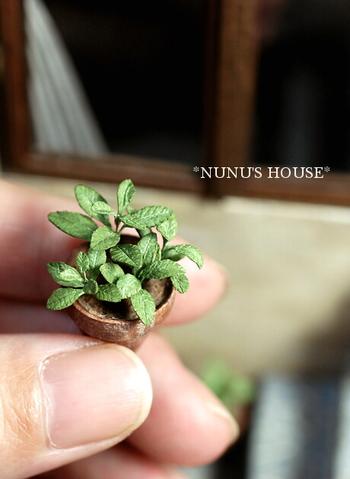 チェリーセージの鉢植え。 これより一回り小さい小鉢のセージも作ったそう! ため息が出ます…