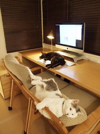 がらんとしたご自宅もインパクト大ですが 「100個適当なものをもつより10個のお気に入りを持ちたい」という ポリシーを元に、一生大事にしていきたい家具や 一つで何役もこなす便利なもの、 4匹の猫たちと安全に暮らせる家具など 人の何倍もこだわりを持ち、試行錯誤も繰り返しています。  そんなまいさんの愛用の品々を振り返ってみましょう。