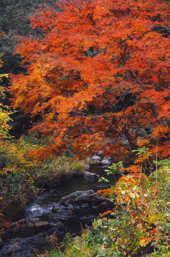 鬼ヶ嶽は、「美山川」の清流が岩を侵食して出来た、美しい渓谷。  春の桜・秋の紅葉の名所ですが、春夏秋冬それぞれの季節に美しい景観を織り成します。