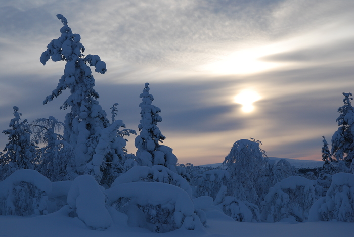 フィンランド・ラップランドの冬景色