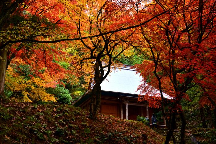 紅葉の中に埋もれるように佇む本堂。