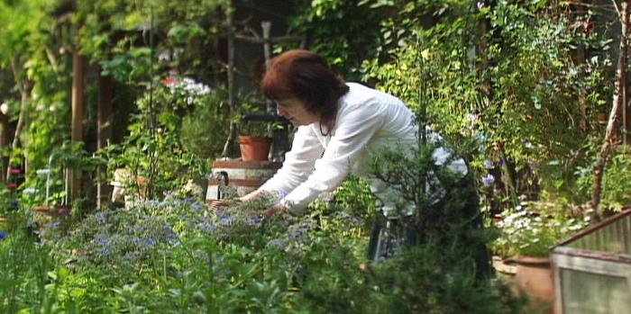 日本とイギリスの両方の文化を生かしたお庭には、ハーブや日本の草花が仲良く咲き誇っています。 大原の伝統的な景観に調和するよう心がけた庭作りからも、美意識の高さが伺えます。