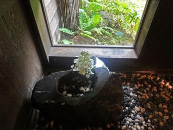 雪見窓のあるつくばいに、ノリウツギが活けられて。