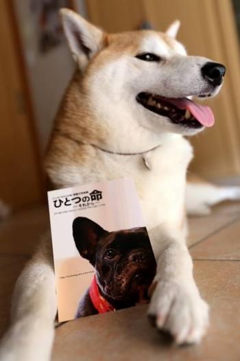 そして、部長のもうひとつのライフワークは、「保護犬のススメ」  実は、部長や妹犬のはんなちゃんも保護犬なのです。家のないコが幸せになれるように、部長も保護犬活動を応援しています。