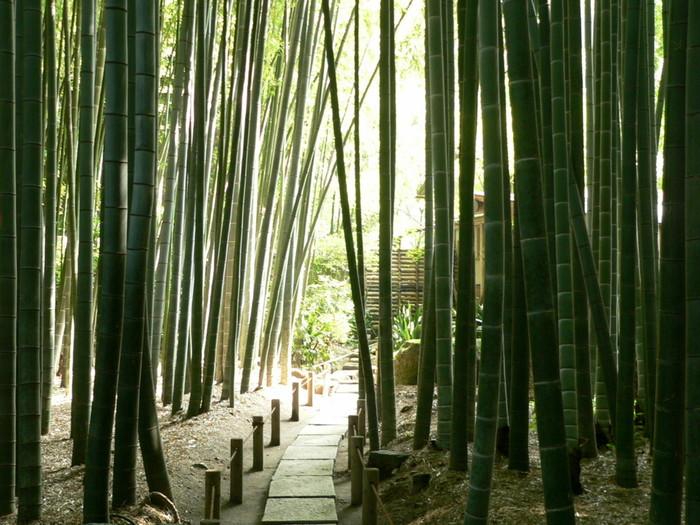 報国寺は1334年創建の臨済宗寺院です。室町時代を通じて足利一門と縁の深いお寺でした。現在では「竹の庭」がとても有名ですが、境内の大銀杏や山門付近の枯山水風庭園、苔むした山道の石段、五輪塔群といった見どころもあります。 竹の庭に入るには別料金(200円)を払う必要があります。