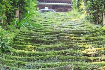 背後の山は室町時代に斯波氏の杉本城があった関係からか、杉本寺境内には斯波氏を供養するための五輪塔群が今でも残っています。