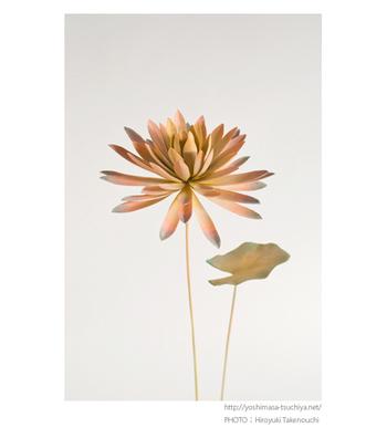 「花」 幽玄な蓮の花と葉ですね。