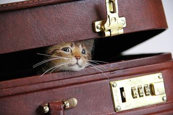 旅行用トランクに隠れて遊ぶネコちゃん。愛くるしすぎ♡