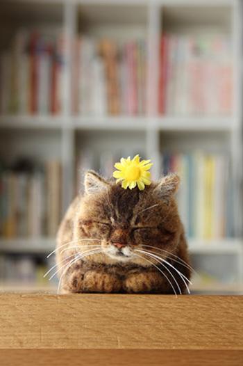 お花を頭にのせたネコちゃん。この可愛さは反則ですね。