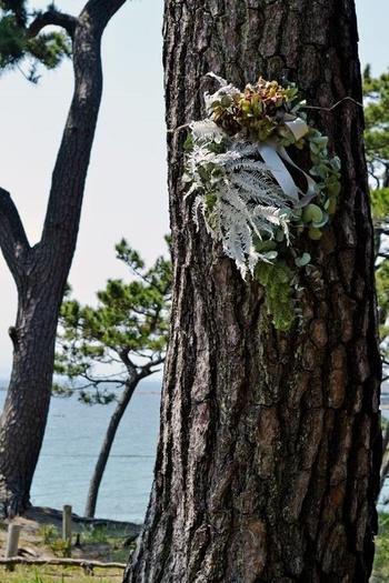 海辺の松に下げた多肉植物のリース。生き物のようで、どことなくシュールです。