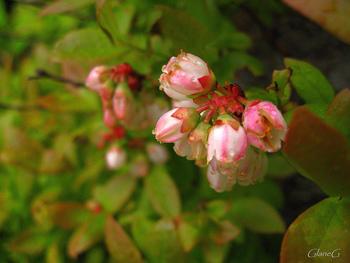 かわいらしい花が咲きます。