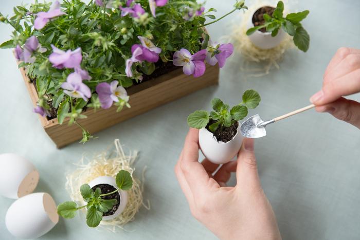 「想いを育てるエッグプランター」では、卵の殻に花を咲かせるプランター作り。4月30日まで開催しているので、まだまだ間に合います。