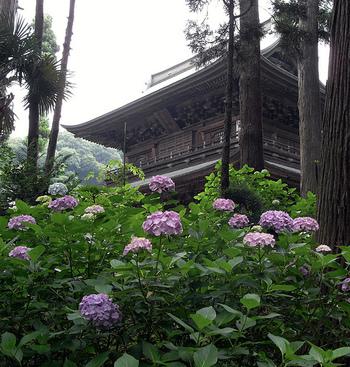 円覚寺 臨済宗の寺院の格式を示す制度「五山の制」で、鎌倉五山の第二位に挙げられている、格式の高いお寺です。春は桜、初夏はあじさい、秋は紅葉と、一年を通じて美しい自然を楽しめます。