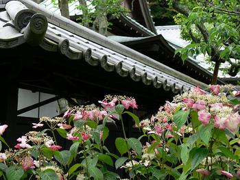 JR北鎌倉駅西口から3分ほど歩いたところにある寺院です。6月初旬からは菖蒲を楽しむことができ、あじさいは6月中旬から7月中旬にかけて見ごろを迎えます。