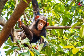 ところで、どうして'モンキーブレッド'という呼び名なのでしょう?そういえば、お猿が群れでかたまっている状態に少し似ているような気もします。また、引きちぎってから口に運ぶ食べ方が、お猿の引っ張り癖を連想させるという人もいます。