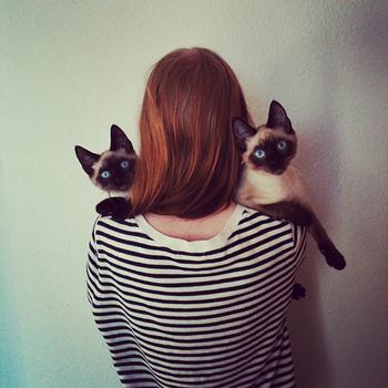 アネットさんの作品は、Instagramや彼女のホームページから閲覧することができます。猫と送る素敵な北欧ライフを、彼女の写真で堪能しちゃいましょう♪