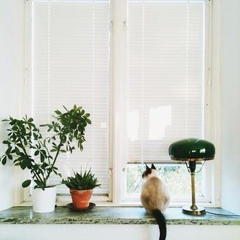 窓際のレイア。庭の鳩を見つめているのだそう。スウェーデンの猫も窓際が好きなようです。