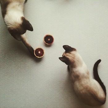 ジュースを作り始めると、猫たちが寄ってきて遊び始めるそう。素早く動き回る2匹を、アーティスティックに構図に収めた1枚です。